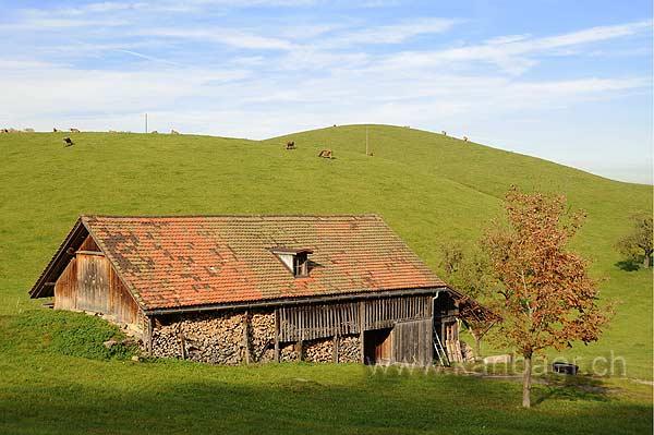 Obererlenmoos (118087)