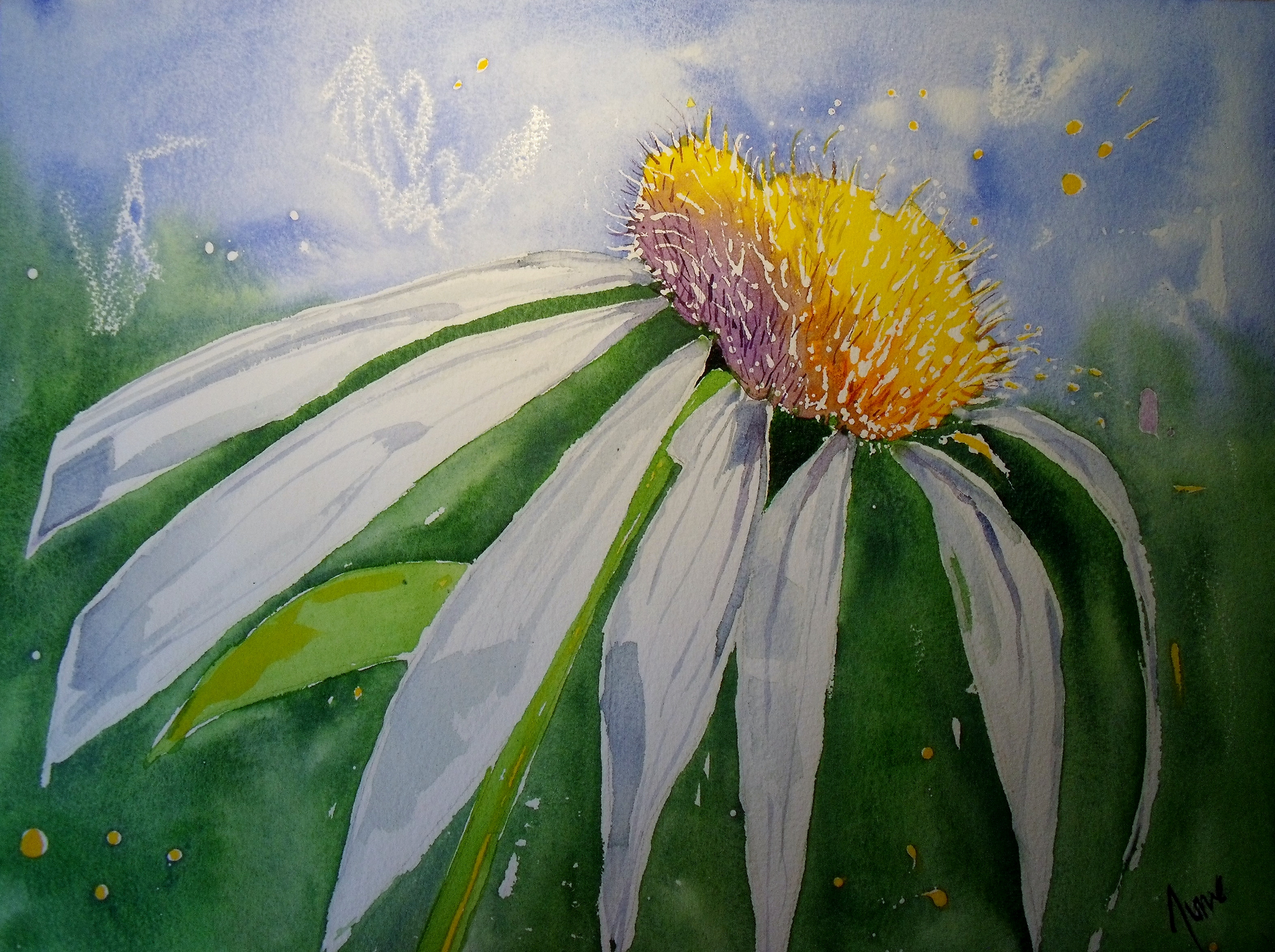 Daisy for Matt & Gemma - Sold