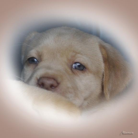 Pup3.jpg