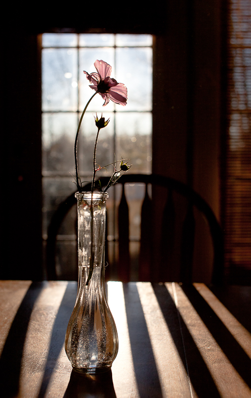 The Last Cosmo on Table with Door