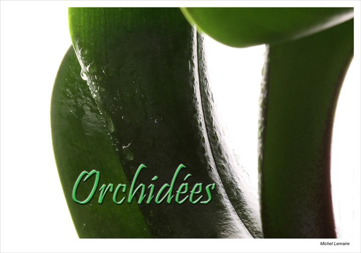 Orchidée-05bw.jpg