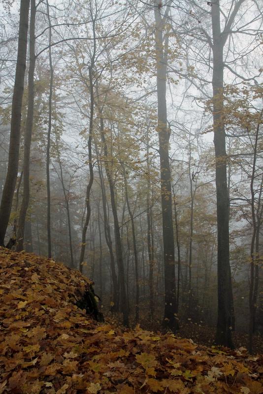 a veil of fog