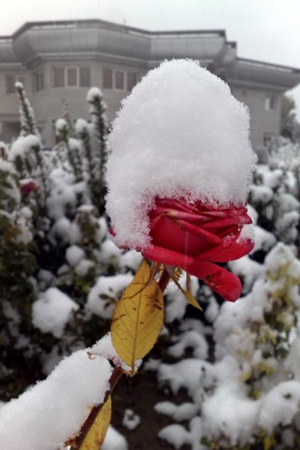 Premature Autumn Snow