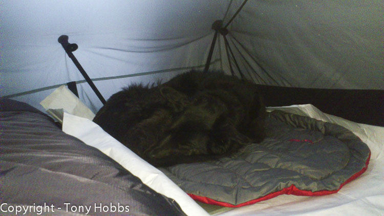 Bess in tent on her bed.  Tent in my conservatory ;-)