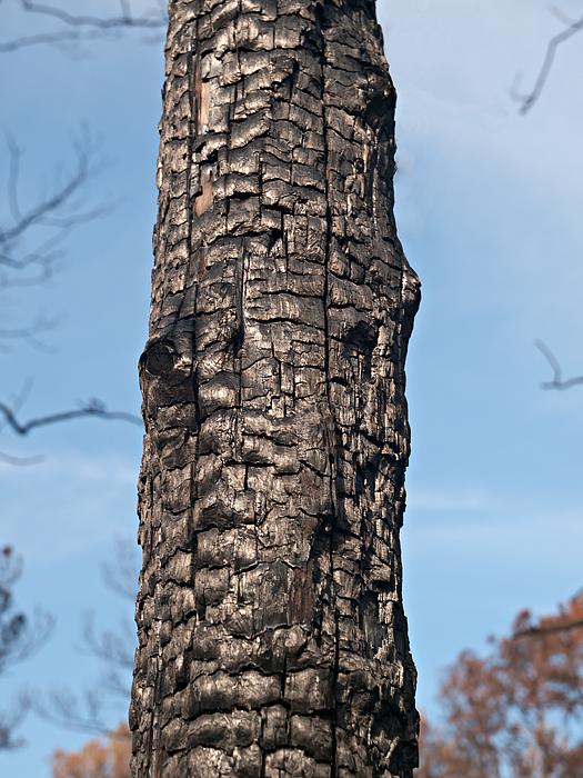 Burned bark #3