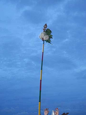 The cock, the Lord`s banner-symbol, is fixed on Lord Subramanyam`s [Murugan`s] spear. Skanda Sashti at Tiruchendur.