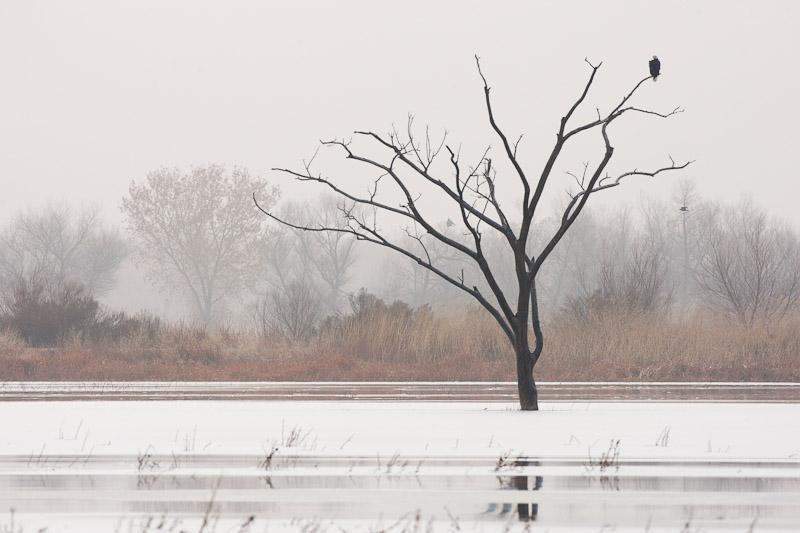 20111213_Bosque_0091.jpg