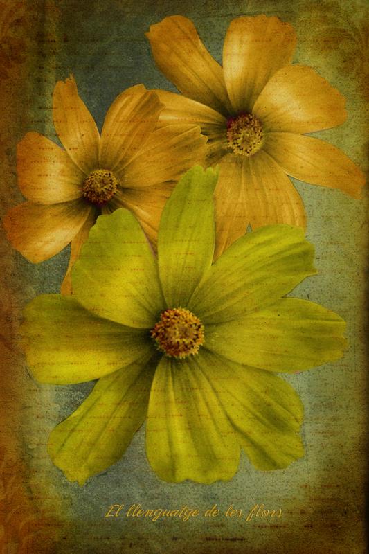 The flowers language
