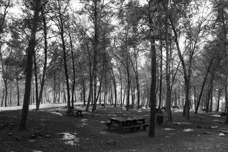 Winter in Angels Forest.jpg