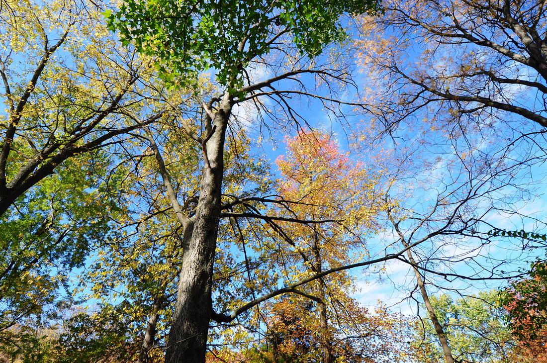 Fall Colors at Uncle John & Aunt Kathleens
