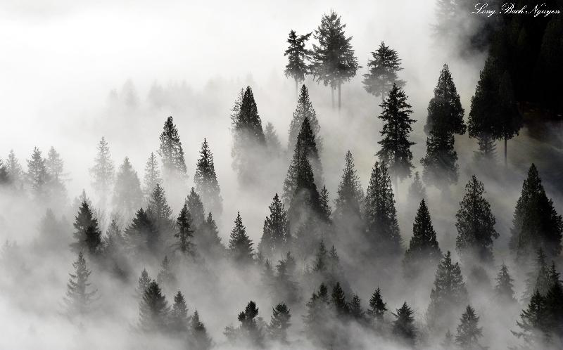 among the mist and fog