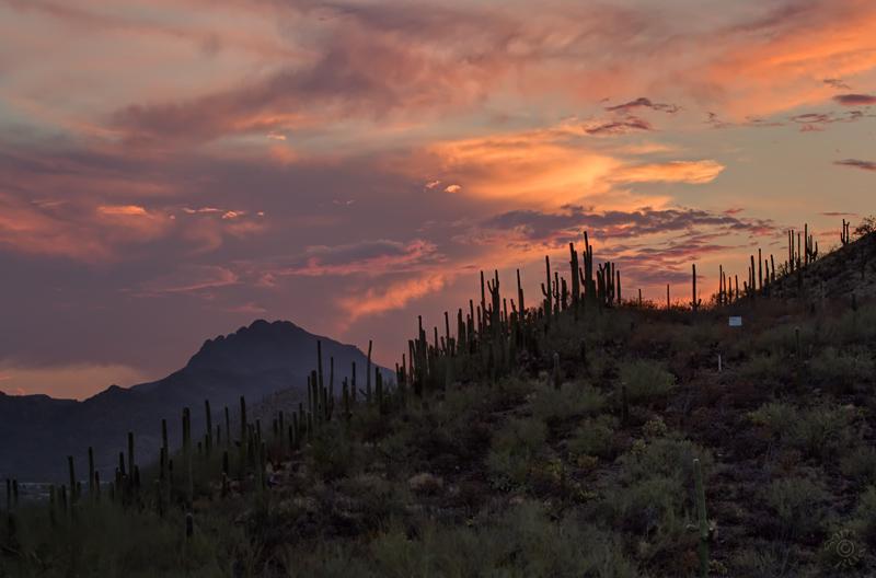 Tumamoc Sunset