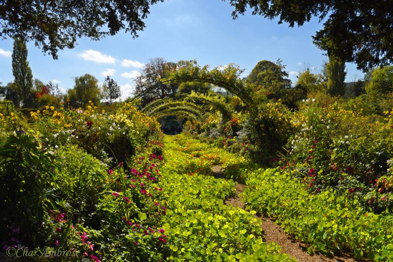 Monets Garden 7569