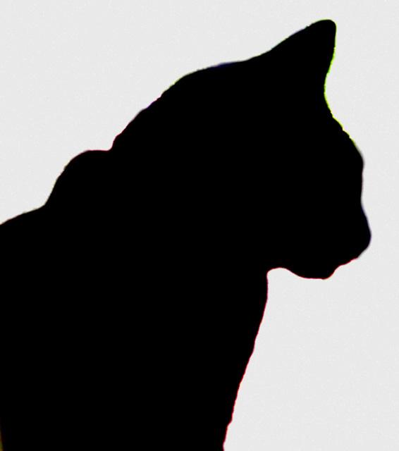2017 August 8 Feline Profile  001
