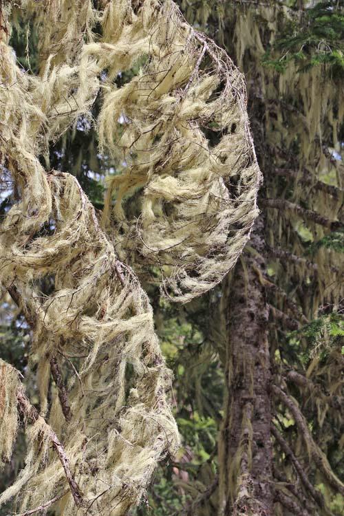 12 lichen or moss