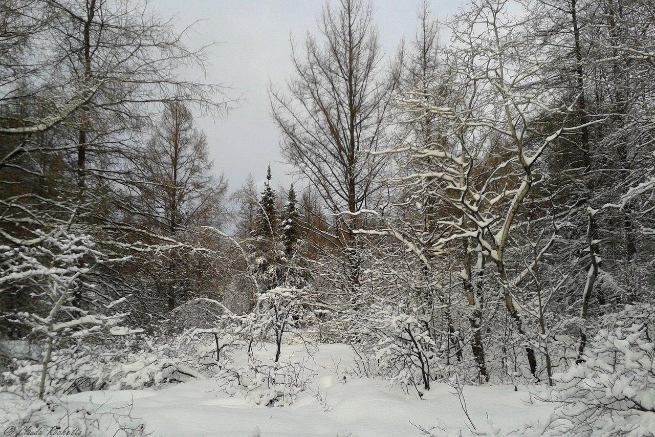 Une belle journée d'hiver 168632635.Z2hnbiho.PaysageBPASF_20190101_140443