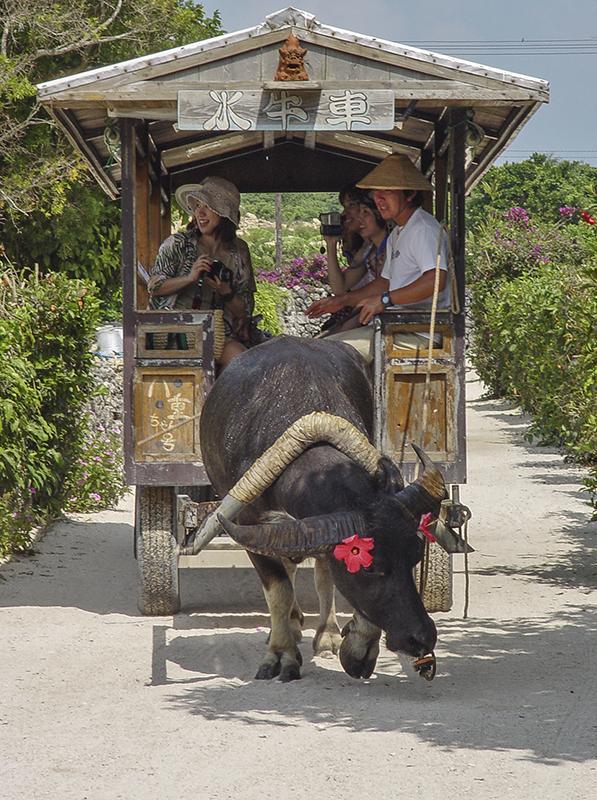 Water buffalo-drawn cart, Taketomi Island