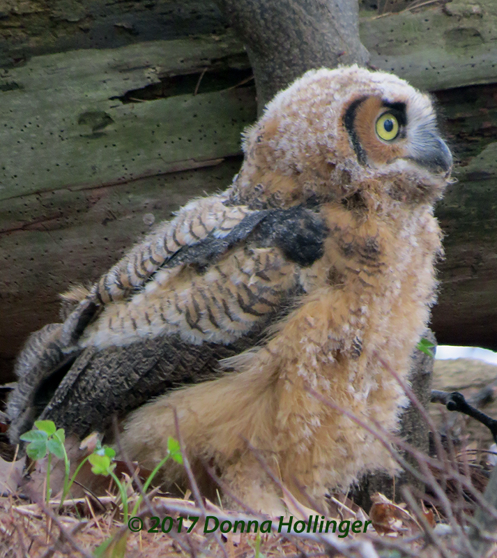 Profile of Owlette