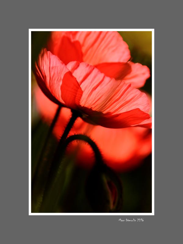 Floral 67