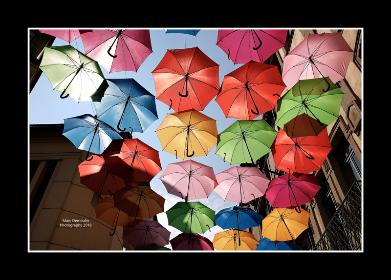 Umbrella street 7