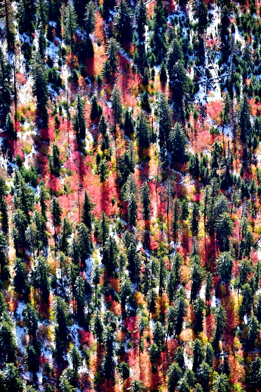 Fall foliage in  Eastern Washington 486