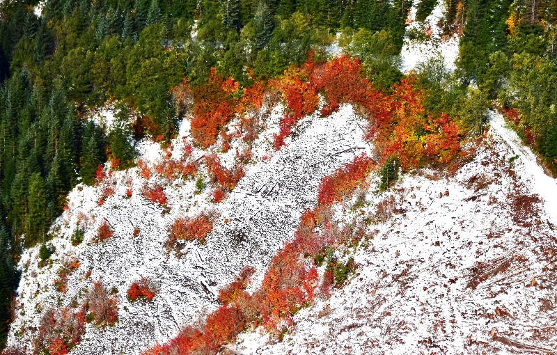Autumn ground foliage in Cascade Mountains Washington 017