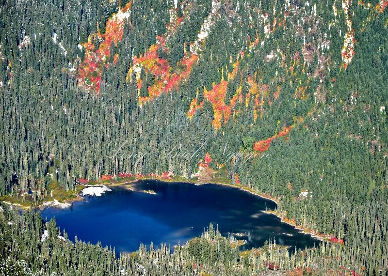 Alpine lake with fall foliage 463