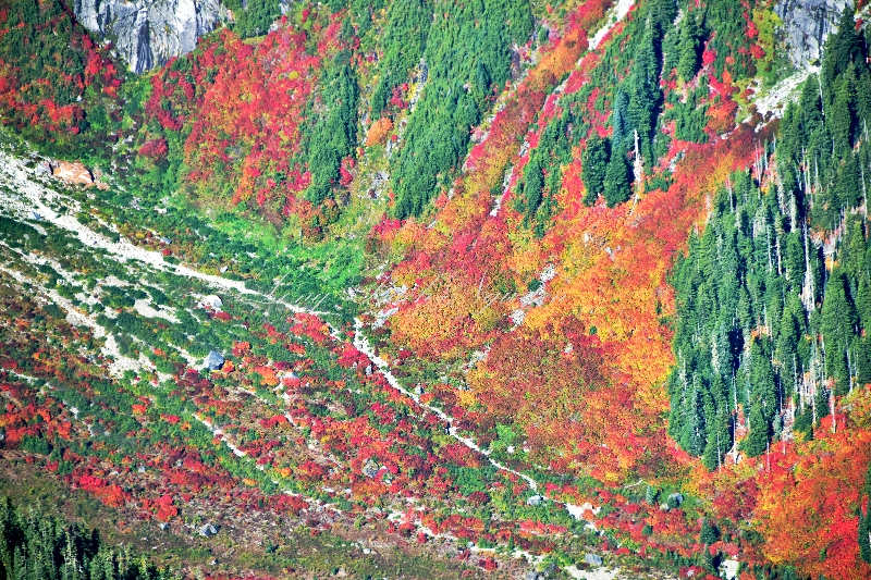 Fall foliage and colors at base of Whitehorse Mountain 329