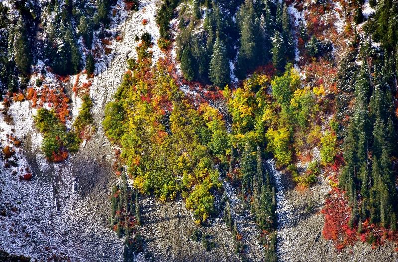 Fresh Snow on Cascade Mountains  814