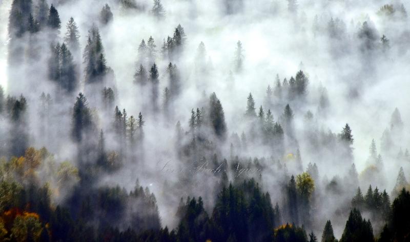 Fog covered landscape 218