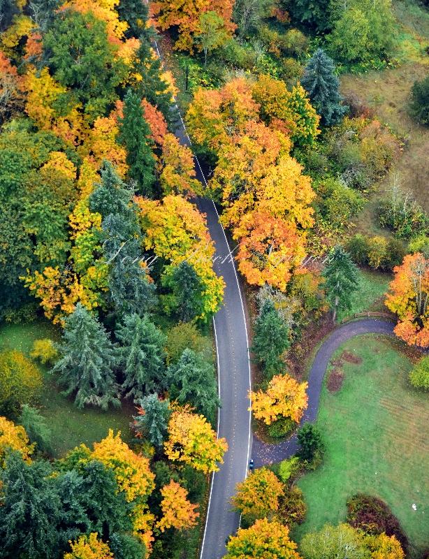 Brilliant Colors of Autumn in Washington State 049