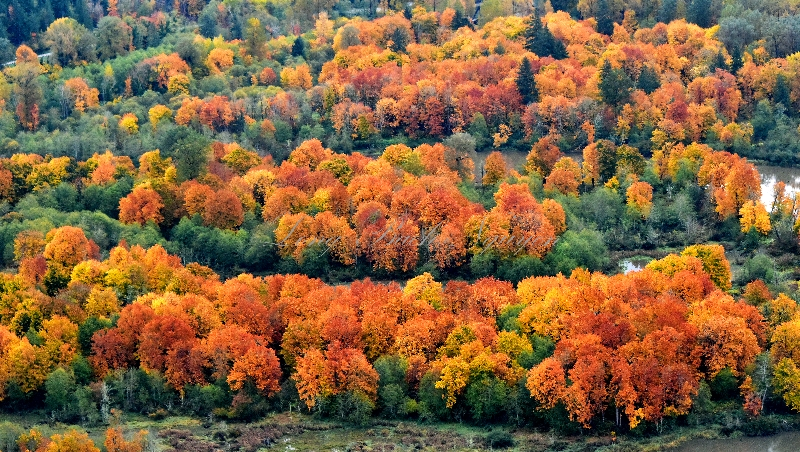 Fall Foliage on Snoqualmie Mill Pond or Borst Lake Snoqualmie Washington 462