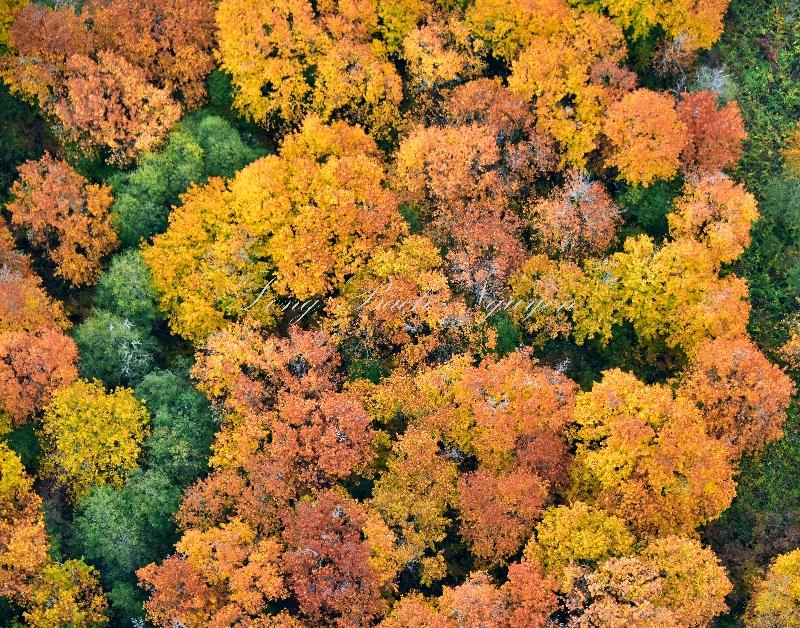 Fall Foliage on Snoqualmie Mill Pond or Borst Lake Snoqualmie Washington 492