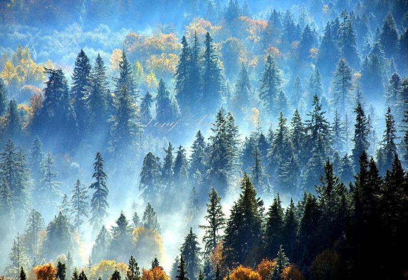 Paradise Valley Conservation Area Woodinville Washington 659