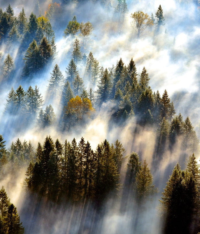 Paradise Valley Conservation Area Woodinville Washington 640