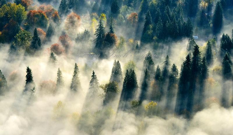 Paradise Valley Conservation Area Woodinville Washington 629