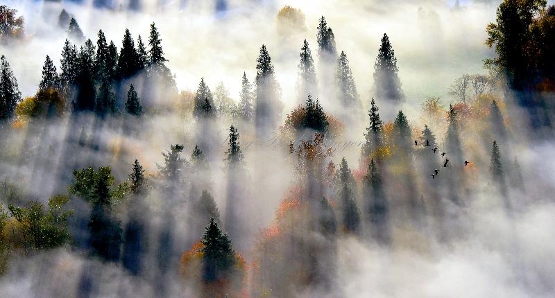 Autumn along Snqoualmie River Valley 530
