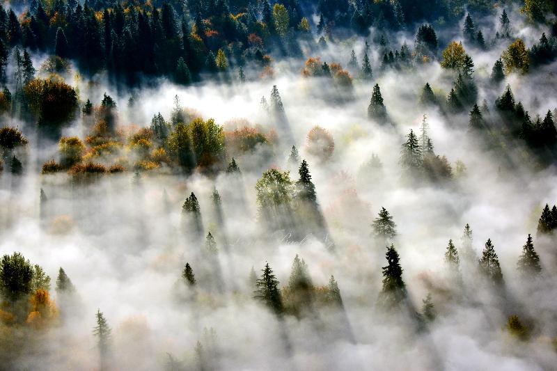 Autumn along Snqoualmie River Valley 538
