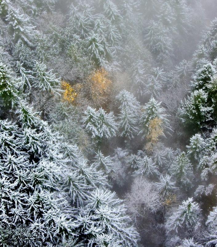 Fresh snow on fall foliage 368