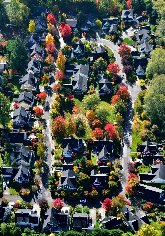 Beautiful neighborhood on Bainbridge Island 236