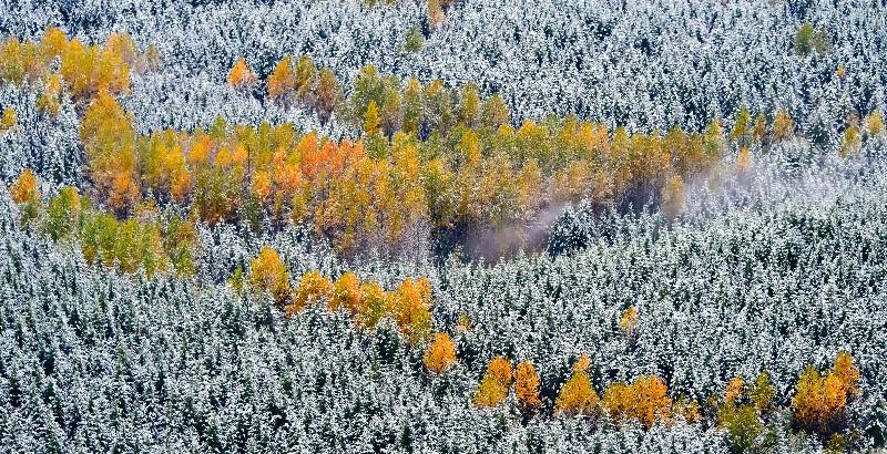 Fresh snow on fall foliage 278