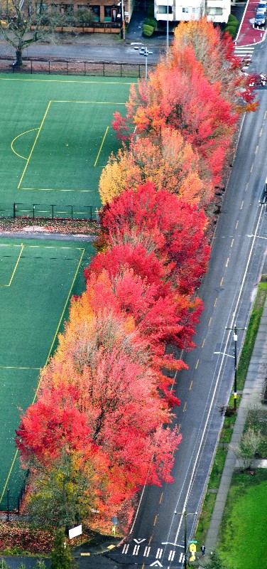 Last of fall colors in Seattle 041