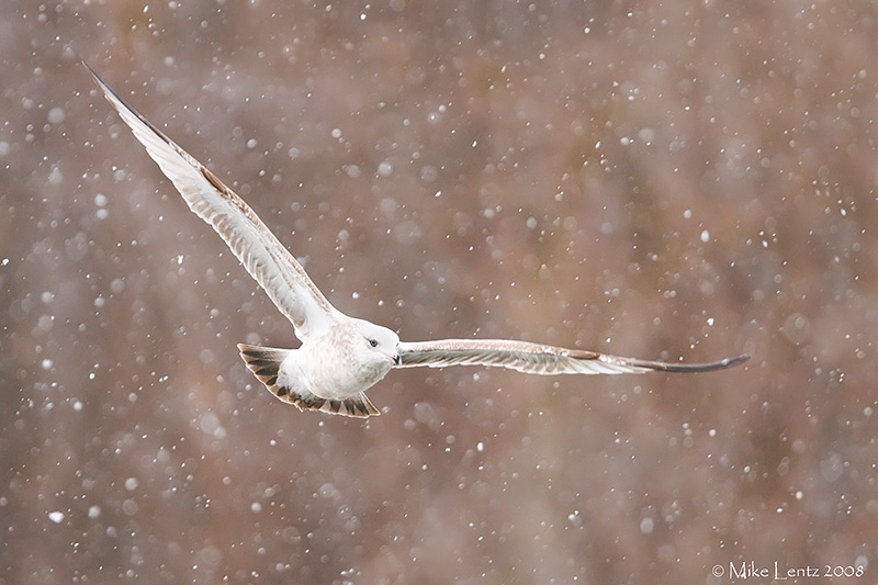 Gull in winter wonderland