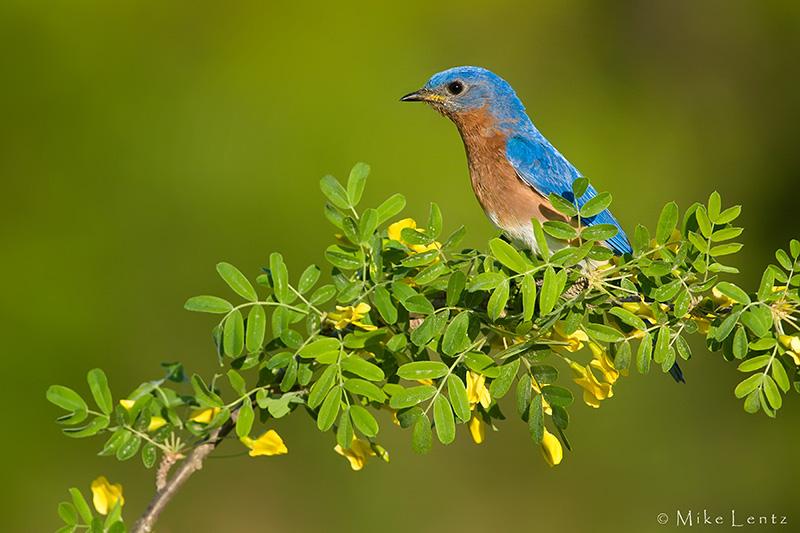 favorite perch
