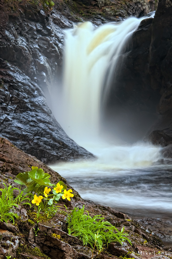 Cascade Falls and Marsh Marigolds