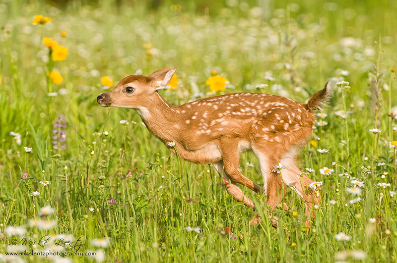 Bambi bounds