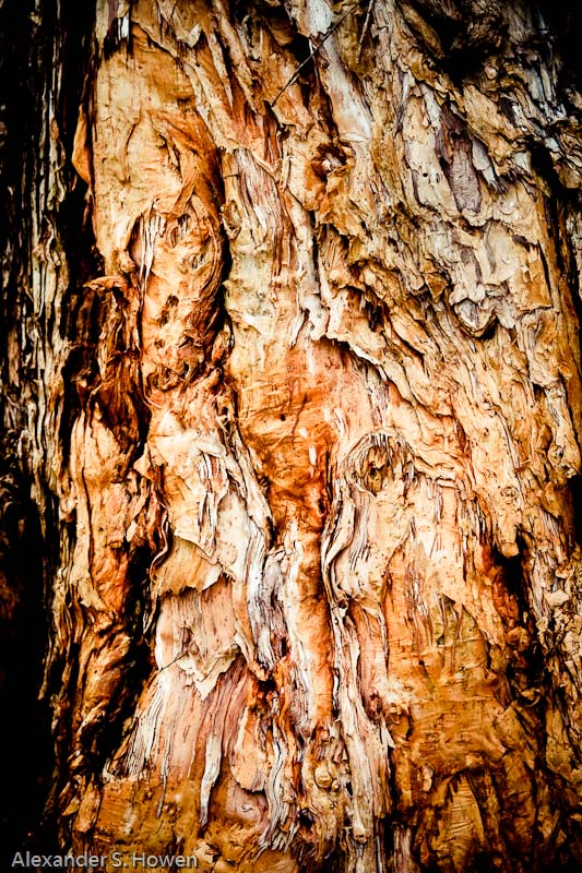 Paper bark abstract tinged with red