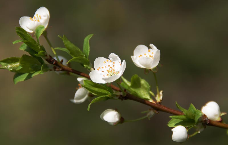 Blossoms 2