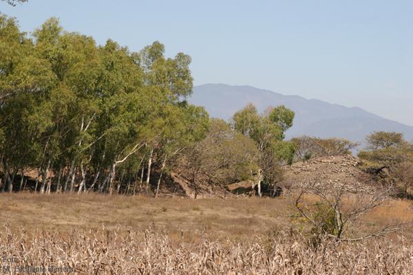 Monticulos en Sitio Arqueologico en Ruta a Canilla