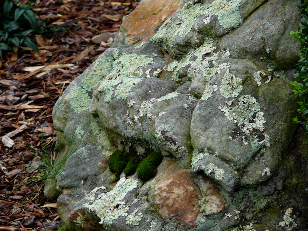 This looked like a fungi, rock being